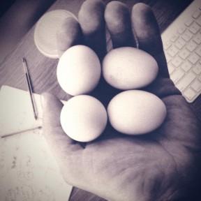 Free range Malmsbury eggs